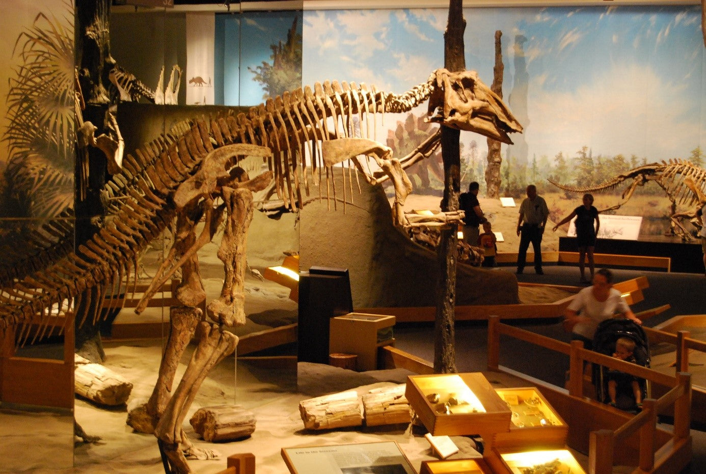 musee squelette dinosaure t rex