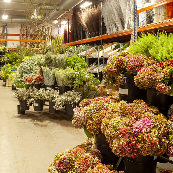 Wholesale Foliage and Tropical Stems from around the world