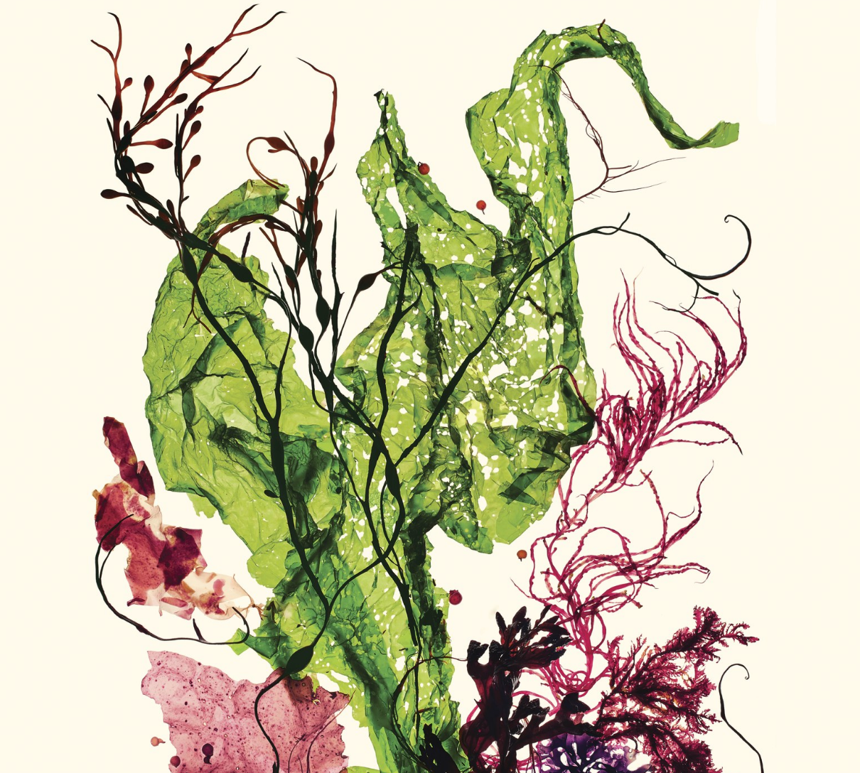Is Seaweed the Perfect Food? | Vogue Magazine