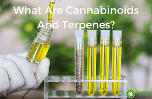 What Are Cannabinoids And Terpenes?