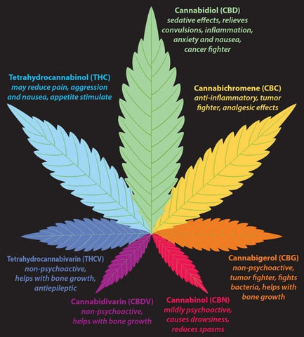 types of cannabinoids infographic