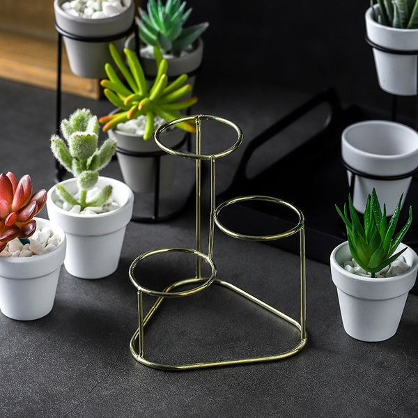 3 in 1 Succulent Planter