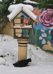 Ferral Black Kitten In First Snow - So Vulnerable - Parade Handmade