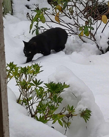 Black Kitten In First Snow Ever - So Vulnerable and Beautiful - Parade Handmade