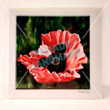Oriental Poppy, Art Card by Nuala Brett-King - Parade Handmade Newport