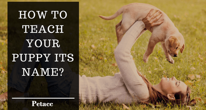 How To Teach Your Puppy Its Name