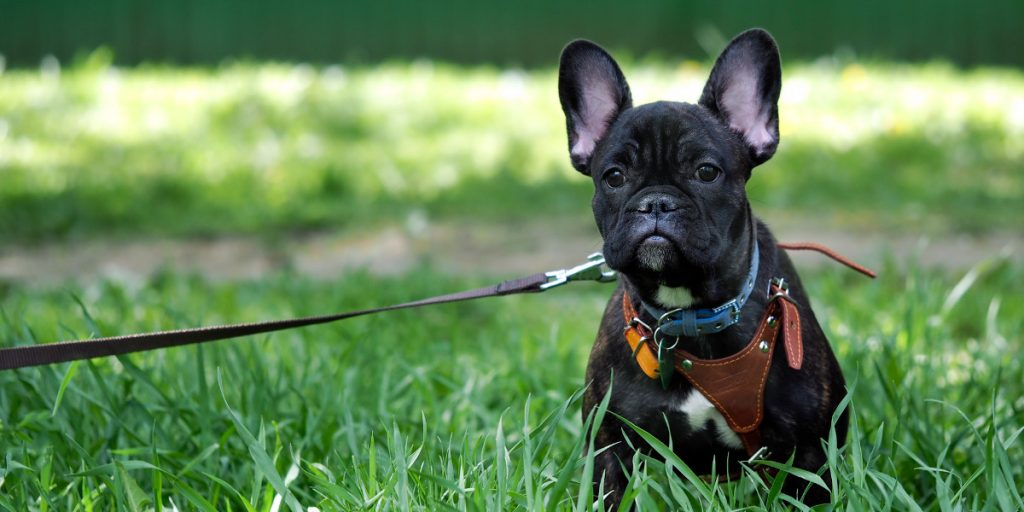 Safe, Secure and Comfortable Dog Harnesses Compared