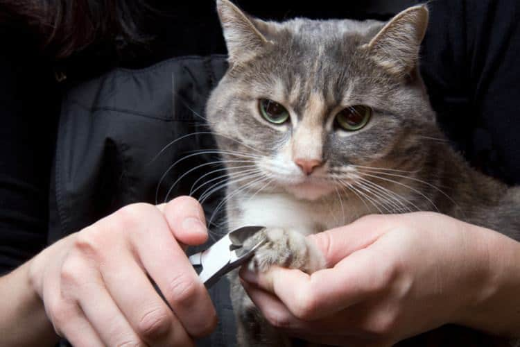 How To Trim Cat Nails