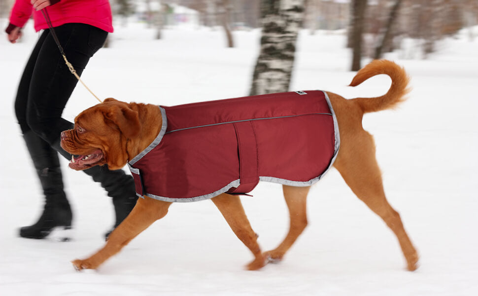 This is A Really Nice Dog Jacket Waterproof Coats