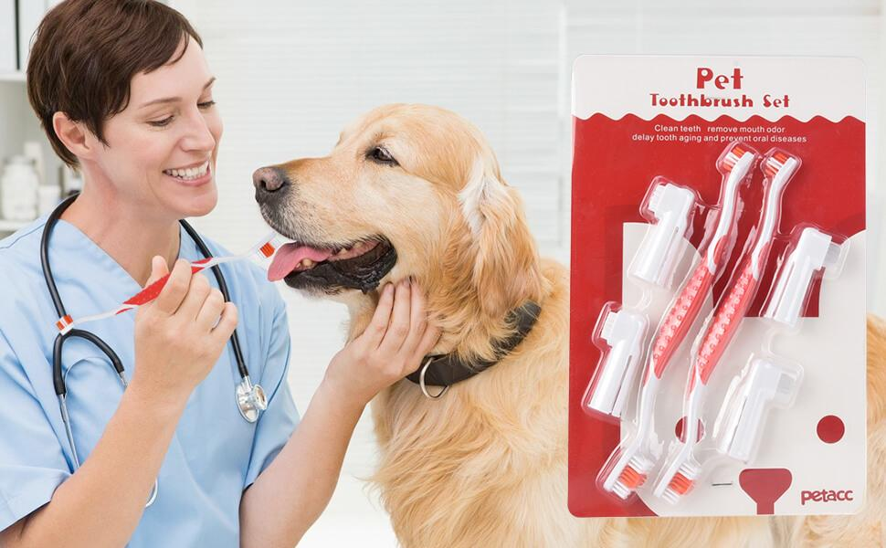 5 Steps to Brushing Your Dog's Teeth