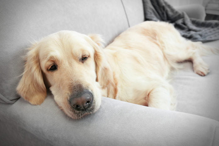 Top tips to keep your dog off the furniture