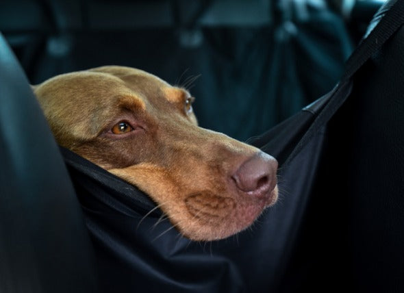 How to Choose the Right Dog Car Seat Cover