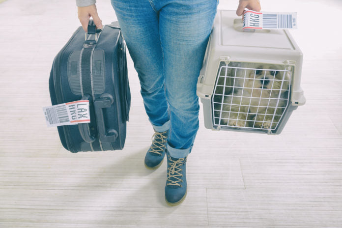 10 essential air travel tips for pet parents