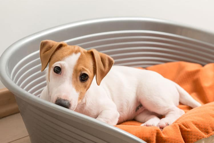 Pets Need Clean Environment Too: How To Clean Pet Toys, Beds And More