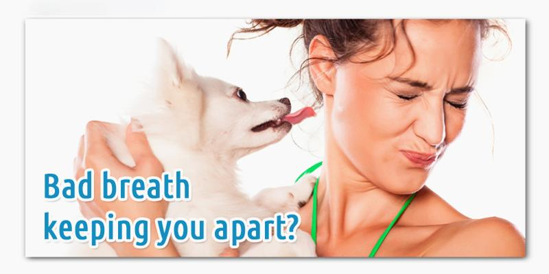 How to Ease Bad Breath in Dog