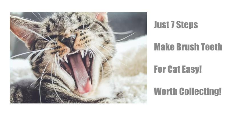 Just 7 Steps Make Brush Teeth For Cat Easy!