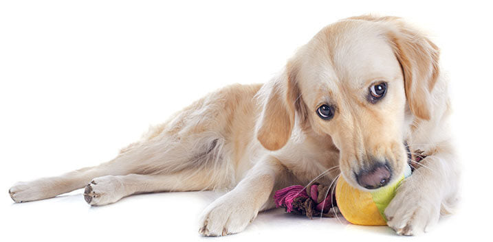 Why Do Dogs Like Squeaky Toys?