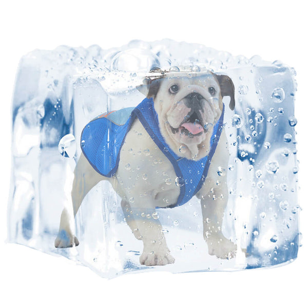 Petacc Pet Cooling Vest Outdoor Dog Cooler Harness Breathable Pet Cooling Coat Sun-proof Dog Jacket, Suitable for Medium and Large Dogs, Blue - Petacc