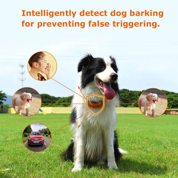 Petacc Rechargeable Bark Collar Anti-bark Collar Dog Barking Controller Training Collar - Petacc