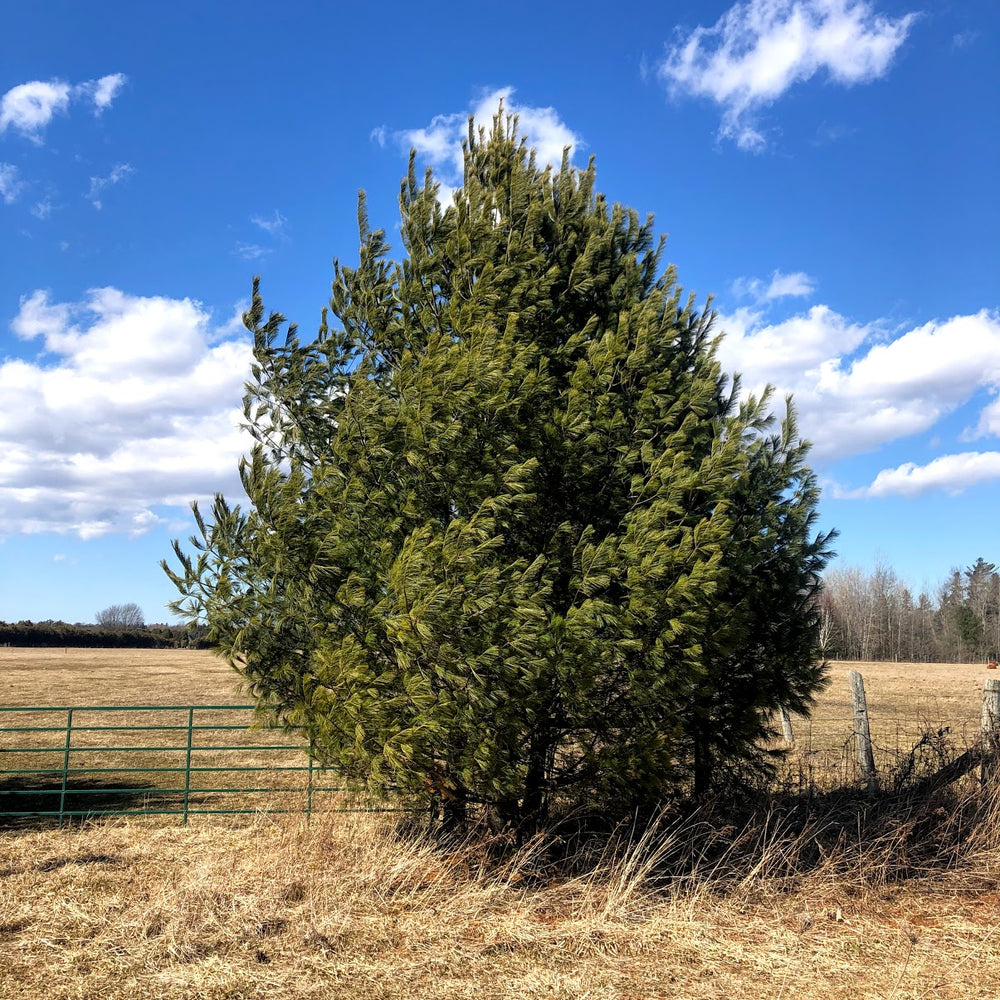 Young tree on farm property