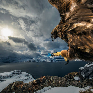 The Winners Of The 2019 Wildlife Photographer Of The Year Contest Are Gorgeous