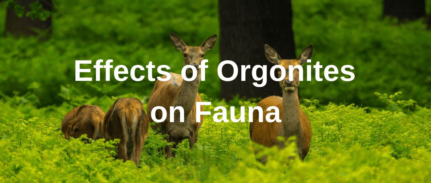 Effects of Orgonites on Fauna