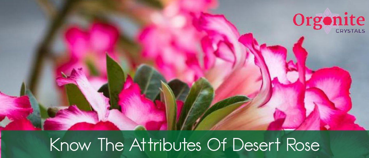 Know the attributes of Desert Rose
