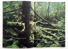 Load image into Gallery viewer, Yves Suter: Yakushima