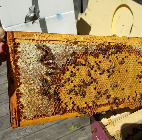 Beginner Beekeeping Five Week Class
