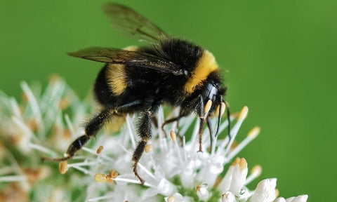 Bumblebee Breath: Breathing Exercise for Children