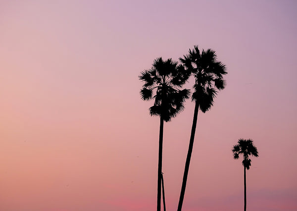 Dreaming of Palm Trees and Desert Vibes. This Canvas Wall Art is perfect, Sunset Canvas Print