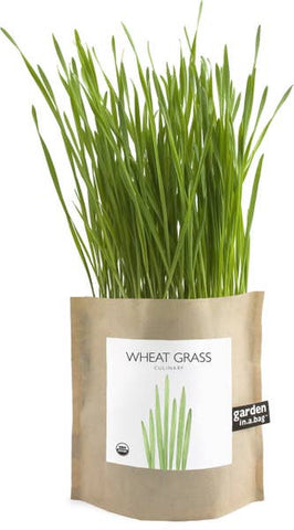 Potting Shed Creations Garden in a Bag Wheat Grass - Small Batch Foody