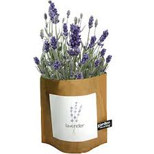 Potting Shed Creations Garden in a Bag Lavender - Small Batch Foody
