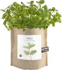Potting Shed Creations Garden in a Bag Mint - Small Batch Foody