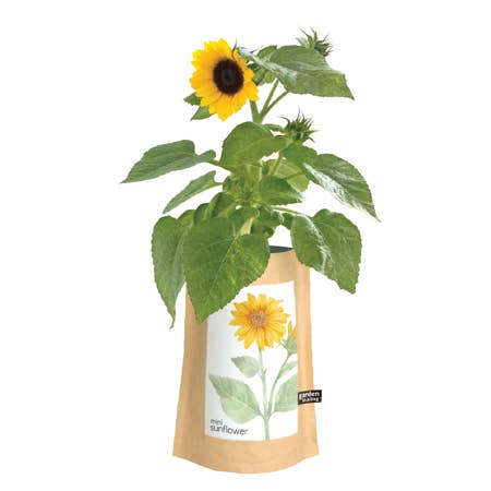 Potting Shed Creations Garden in a Bag Mini Sunflower - Small Batch Foody