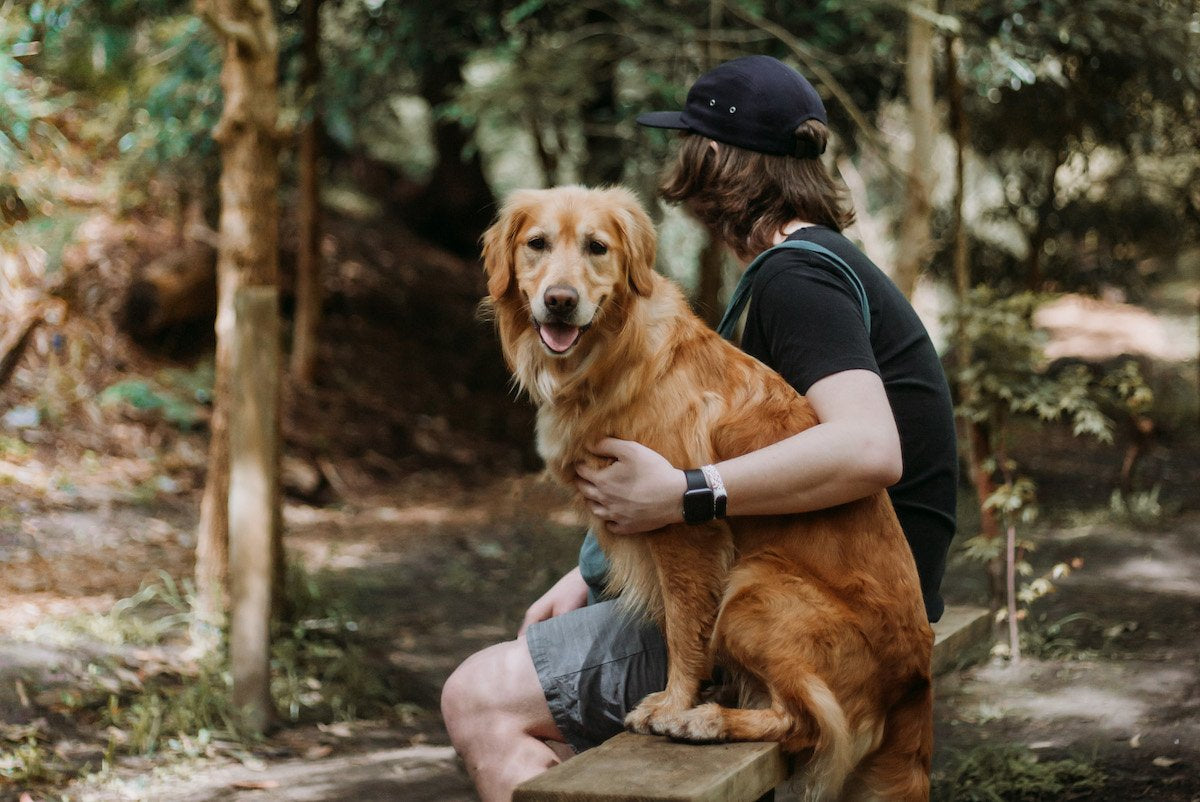Dog in forest with owner