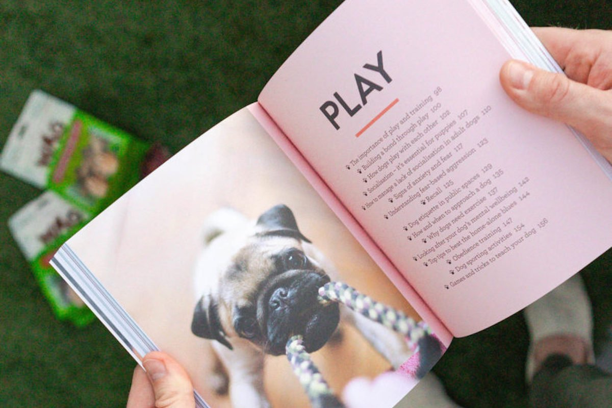 Golden Rules For Obedience Training For Dogs