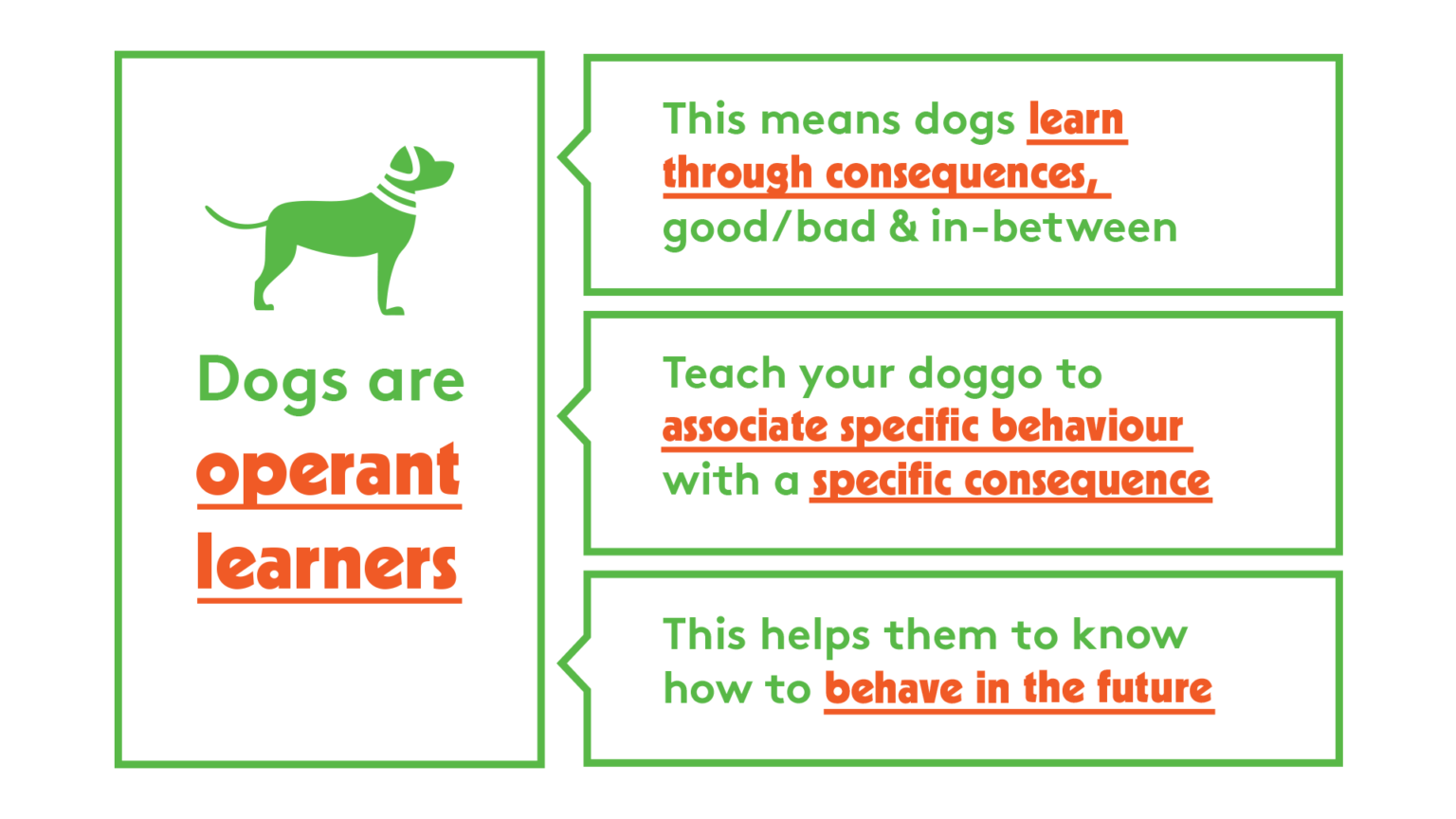 Dogs Are Operant Learners