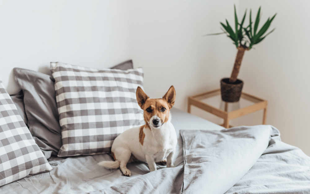 Should Your Dog Sleep In Your Bed? How Bad Can It Be?