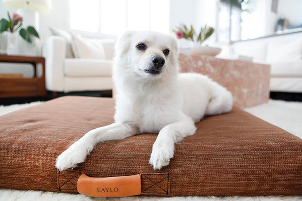 dog beds that match your style