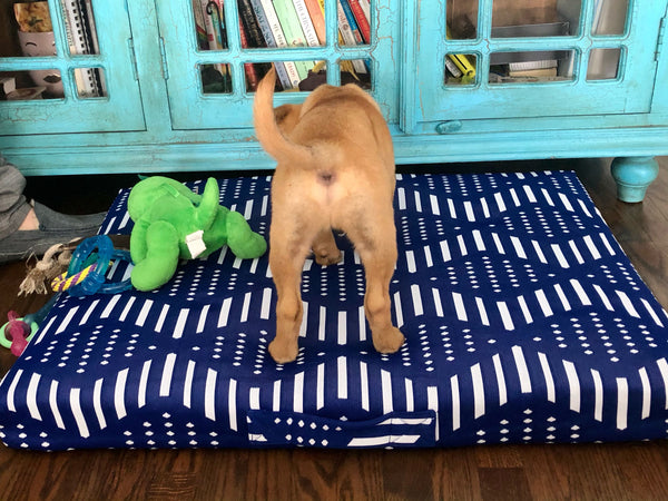 dog scratching bed