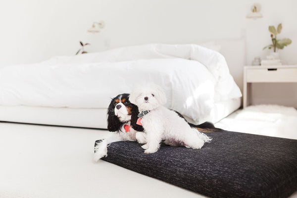 best beds for puppies