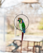 Load image into Gallery viewer, Conure