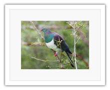 Load image into Gallery viewer, BIRD KERERU