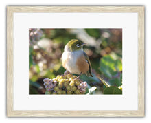 Load image into Gallery viewer, BIRD SILVEREYE