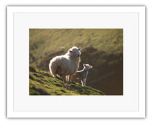 Load image into Gallery viewer, EWE & LAMB