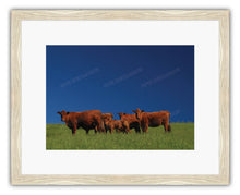 Load image into Gallery viewer, FAMILY OF CATTLE