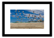 Load image into Gallery viewer, CASTLEPOINT SEAGULLS
