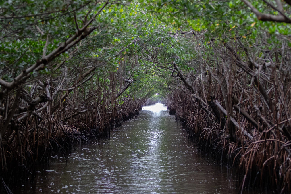 Everglades National Park in Florida - water view from an airboat