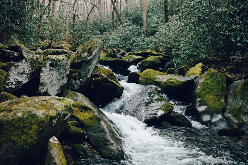 Moss Covered Rocks in a River in the Great Smoky Mountains National Park North Carolina and Tennessee USA